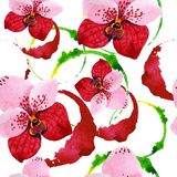 Red orchid vanda flower. Floral botanical flower. Seamless background pattern. Fabric wallpaper print texture. Aquarelle wildflower for background, texture vector illustration