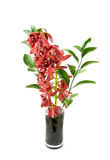 Red orchid in vase Stock Photo