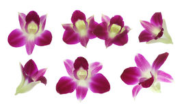 Red orchids Royalty Free Stock Photography
