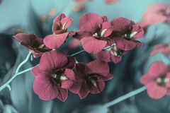 Red orchids in garden Royalty Free Stock Photos
