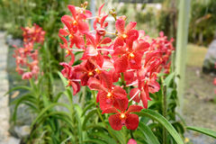Red orchids on green Stock Image