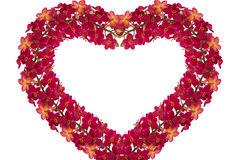 Red Orchids. Heart of red orchids on white background Royalty Free Stock Image