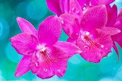 Red Orchids Stock Images