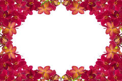 Red Orchids. Red orchid on a white background Royalty Free Stock Image