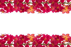 Red Orchids. Red orchid on a white background Royalty Free Stock Photos