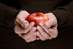Red organic apple in senior hands Royalty Free Stock Photo