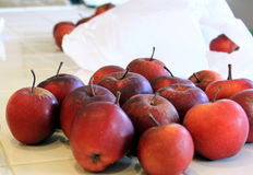 Red Organic Apples. Being prepared for baking Stock Image