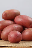 Red organic potatoes Stock Photography