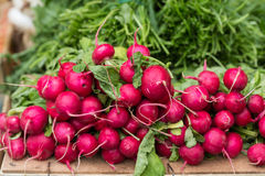 Red Organic Radishes Royalty Free Stock Images