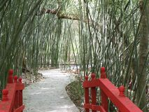 Red bridge leads to a curved path. Red oriental looking bridge leads to a curved path through a bamboo garden royalty free stock image