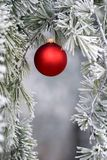 Red Ornament 2. A single red ornament decorates a frosted pine tree Royalty Free Stock Images