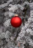 Red Ornament 4. A single red ornament hangs from a frosted pine tree Royalty Free Stock Photography