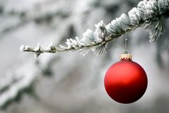 Red Ornament 5. A single red ornament hangs from a frosted pine tree. Copypace for your message Stock Photography