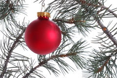 Red Ornament on Christmas Tree Stock Images