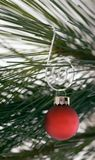 Red Ornament on Curly Hanger. Red ornament on spiral hanger against background of pine branch stock photos