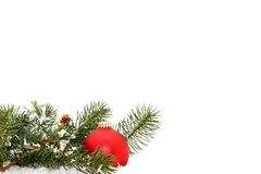 Red Ornament in Pine Royalty Free Stock Photos