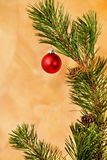 Red ornament in pine branch Royalty Free Stock Images