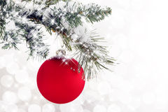 Red Ornament Snowy Branch Royalty Free Stock Images