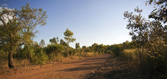 Red Outback Dirt Road, Tropical Bush. Scrub Vegetation, Northern Territory, Australia Royalty Free Stock Photo
