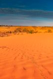 Animal tracks in red sand dune Stock Photography