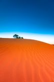 Red sand dune with ripple and blue sky Royalty Free Stock Photos