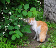 Red outdoor cat stock photos
