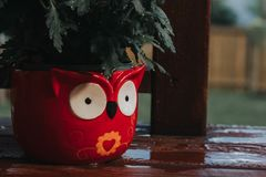 Red owl in garden stock photography