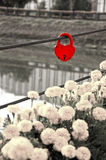 Red padlock in the shape of heart Stock Images
