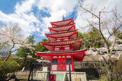 Red pagoda in cherry blossom sakura in spring season, Fujiyoshid Stock Photo