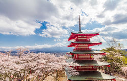 Red Pagoda with Mt Fuji on the background in cherry blossom sakura in spring season Stock Photos