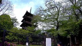 Red pagoda in Ueno park. stock footage