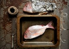 Red pagrus fish ready to be cooked in the oven Royalty Free Stock Photos