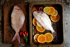 Red pagrus fish ready to be cooked in the oven Stock Image