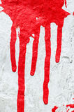 Red paint drips on white background Stock Photos