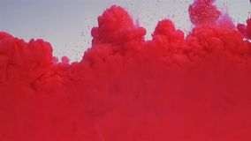 Red paint drops out due to mixing in water. The ink is curled under the water. Cloud of ink isolated on a white