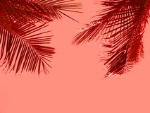 Red palm fronds against the coral tone background. Tropical vacation concept stock images
