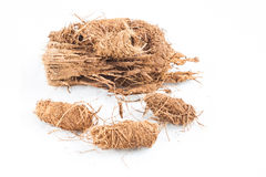 Red palm weevil nest Royalty Free Stock Photo