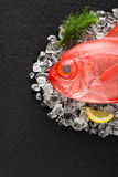 Red palometa fish on ice on a black stone table Stock Images