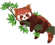 Red Panda. Cute panda is sleeping on a branch Stock Image