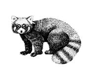 Red panda hand drawn image. Sketch style picture. Made with ink liner. Cute black and white animal. stock illustration