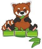 Red panda sit Stock Image