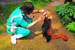 red panda and trainer Stock Photo