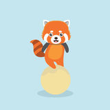 Red panda. Stock Photography