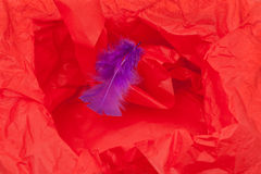 Red Paper and Feather Royalty Free Stock Image