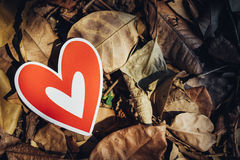 Red paper hearts on the ground. Is covered with dry autumn leaves, valentine day Stock Photos