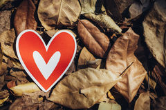 Red paper hearts on the ground. Is covered with dry autumn leaves, valentine day Royalty Free Stock Image