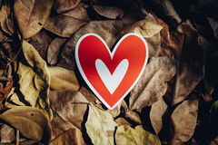 Red paper hearts on the ground. Is covered with dry autumn leaves, valentine day Stock Image
