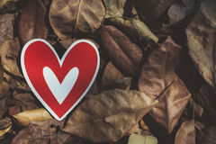 Red paper hearts on the ground. Is covered with dry autumn leaves, valentine day Stock Photo