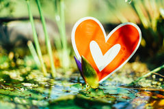 Red paper hearts on the swamp. Red paper broken hearts on the swamp, valentine day Royalty Free Stock Photography