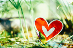 Red paper hearts on the swamp. Red paper broken hearts on the swamp, valentine day Stock Images